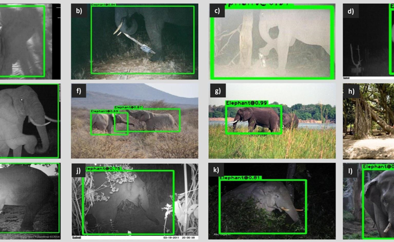 New artificial intelligence could save both elephant and human lives – Mongabay.com